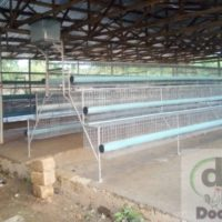High quality Battery cages